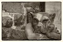 The Monday Face (NRG Photos) Tags: friedhof cemetery grave gargoyle grab darmstadt mondayface montagsgesicht