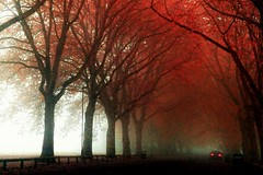 Foggy start (Jason Gambone74) Tags: park autumn trees red tree fall car fog lights branch
