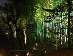 Bamboo road (! WARy) Tags: light green up night kyoto bamboo 高台寺