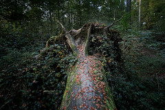 Autumn colors, Bois du Laerbeek, Brussels, Belgium (monsieur I) Tags: wood autumn colors forest europa europe colours belgium eu wideangle canonefs1022mmf3545usm canoneos550d monsieuri