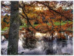 Autumn - Dmmesmoen (Svein Bjerkholt) Tags: autumn reflection fall norway canon norge hdr hst beautyfull grimstad dmmesmoen mygearandme