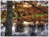 Autumn - Dømmesmoen (Svein Bjerkholt) Tags: autumn reflection fall norway canon norge hdr høst beautyfull grimstad dømmesmoen mygearandme