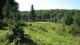 Quebec Luxury Red Stag Hunting & Elk 8