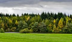Autumn on Ragley Estate 2 (bennatrinsphoto) Tags: nikon adobe nikkor afs dx lightroom lightroom3 d5100