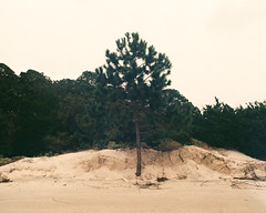 (thoward152) Tags: ocean film beach nature landscape island hurricane driftwood jekyllisland driftwoodbeach hurricanesandy thisisaforeground