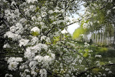 ...quei fiori appassiti al sole di un aprile ormai lontano... (UBU ♛) Tags: blues blulontano ©ubu blutristezza unamusicaintesta landscapeinblues bluubu luciombreepiccolicristalli