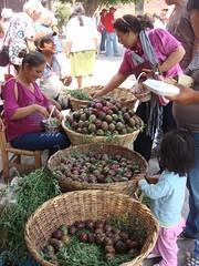 Vendimia en el Festival de la Pitaya de Amacueca (pitayapitahaya) Tags: jalisco pitaya stenocereus amacueca