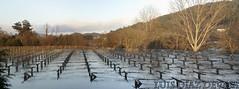 desbordamiento del ro Umia (Luis Diaz Devesa) Tags: autumn espaa green vineyard spain vines europa wine flood vine winery galicia galiza grapes napa pontevedra vid viedo inundacin albario luisdiazdevesa indunaciones