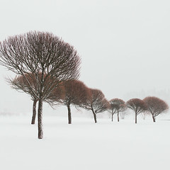 Eight (Vesa Pihanurmi) Tags: trees winter snow espoo finland minimalism nature snowstorm blizzard white trunks branches cold