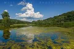 Rural Western Pennsylvania (Matt Grans Photography) Tags: pennsylvania keystonepark nature lake swamp algae clouds landscape greentrees bluesky