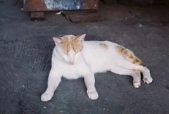 Cat (pytorsavnt) Tags: analog 35mm film olympusom1 kodacolor