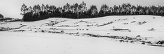 road to nowhere bw version (NOL LUV DI) Tags: snow napier hawkesbay