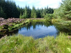 Pond on Bannachra Muir (luckypenguin) Tags: scotland lochlomond helensburgh balloch johnmuirway pond