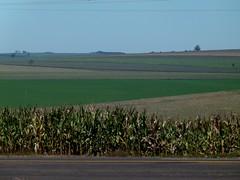 (IgorCamacho) Tags: campo field cornfields agricultura agriculture natureza nature suldobrasil southern brasil brazil paran landscape paisagem