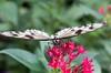 K46A8025 (Yvonne23021984) Tags: schmetterling butterfly hamm germany deutschland maxipark markro photography macrophotography canon canonphotography markofotografy canoneos7dmarkii insects insekten nature naturfotografie naturephotography closeup colorkey schmetterlinge butterflies