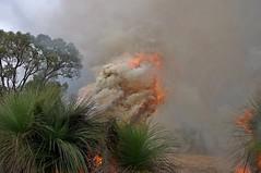 K52S5842cs (Ben D'Acunto) Tags: burnoff bushfires pentax pentaxk5iis