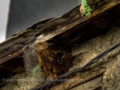 "Andorra ""hot water"" history: Part Alta. Escaldes, E-E, the center, Andorra (lutzmeyer) Tags: 300mm andorra andorracity camidelacanaleta ee escaldes europe iberia iberianpeninsula lutzmeyer partalta pirineos pirineus pyrenees pyrenen abadona abadoned alteshaus antic aufgegeben autumn bild center centre city foto fotografie geschichte herbst historia historic historie historisch history iberischehalbinsel image imagen imatge lutzlutzmeyercom mfmediumformat oldhouse otono past photo photography picture september septiembre setembre setiembre sonnenaufgang sortidadelsol stadtgebiet sunrise tardor urban urbanity verlassen escaldesengordany"
