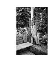 Portrait of the Artist as His Furture Self - 2/12 (mckinnon.james) Tags: plants contax tmax berlin