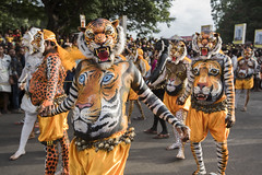 Pulikali 2016 | Thrissur, Kerala (Ravikanth K) Tags: 500px pulikali thrissur kerala tradition festival tiger dance puli art people onam godsowncountry event body painting bodypainting lion leapord pulikali2016 photo series photoseries photostory men paint colours