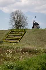 Sluis (I) (dididumm) Tags: windmill meadow tree spring sunshine sonnenschein frhling baum wiese windmhle sluis zeeland niederlande holland netherlands