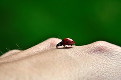 DSC_0523 (Mattia Nardi) Tags: nature hand natura mano ladybug coccinella
