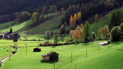 der Herbst naht (mikiitaly) Tags: elementsorganizer sdtirol altoadige italy pfitsch pfitschtal herbst wiese bewiahn nature natureza