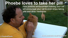 Training Your Cat to take a Pill (youtube.com/utahactor) Tags: pink red orange pet cats pets playing cute classic animal sport yellow training cat fun nose mackerel ginger video chats amazing feline chat flickr humorous play kodak action outdoor lol tabby birth humor obey adorable fluffy voice kittens whiskers phoebe zeus gato precious laugh gata delivery tabbies felines spotted hd freckles obedience 猫 playful videos stalking striped furbaby chatte informative commands instructional furbabies кошка youtube γάτα cattitude chatze friendsofzeusphoebe