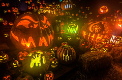 The Epic Jack-O-Lantern Display (Frank C. Grace (Trig Photography)) Tags: orange green halloween yellow spectacular scary glow display pentax creepy spooky hdr 2012 jackolanterns k5 rogerwilliamspark rogerwilliamszoo tonemapped jackolanternspectacular trigphotography frankcgrace travisreckner passionforpumpkins