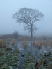 Mist tree and imagination (Mr Grimesdale) Tags: mist tree kirkby stevewallace mrgrimesdale
