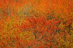 red on red (Monet Hommage) (enki22) Tags: red abstract nature landscapes monet impressionism enki22
