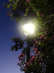 Street Lamp (AlexRuz) Tags: flowers light summer oldsanjuan puertorico warmth sanjuan oldcity