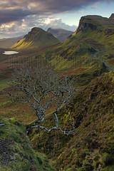 THAT TREE (Steve Boote..) Tags: dundubh isleofskye scotland landscape dawn canoneos550d sigma18200f563osdc singhrayfilters leefilters nd3reversegrad ndgrads 06s manfrotto steveboote lochcleat cleat quiraing trotternish tree cloud innerhebrides druimanruma biodabuidhe