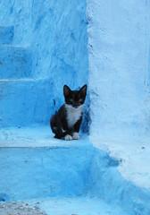 Chefchaouen. Little kitten on blue steps (Sallyrango) Tags: cats northafrica arabic morocco maroc chaouen chefchaouen straycats
