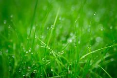 Nature (@urelink) Tags: green nature water eau vert parc rennes herbe matin rose gayelle