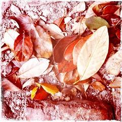Look Down (rileyo) Tags: nature leaves sand deadleaves brunswickeast alehouseproject
