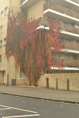 Bells Gardens Estate, Peckham, London (J@ck!) Tags: autumn mist london growth peckham councilestate socialhousing se15 londonboroughofsouthwark bellsgardensestate