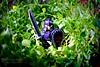 JuNGLe WaRRioR (Tom Hagen) Tags: life green tom photography lego selva jungle warrior hagen guerrero jungla oihana tomhagen tomhagenphotos gudaria junglewarrior oihaneko