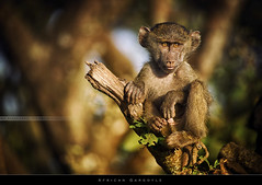 African Gargoyle (Explored #410) (bgspix) Tags: africa wild portrait animals forest canon tanzania monkey nationalpark interesting wildlife ngorongoro explore crater shade singe mamals explored ef100400f4556lis eos5dmarkiii