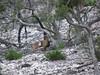 Texas Whitetail Hunt & Exotics - Kerrville 25