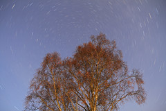 Autumn Star Trails. (Gordie Broon.) Tags: longexposure autumn nature landscape geotagged photography scotland alba scenic escocia startrails birchtree schottland ecosse invernessshire drumnadrochit scottishhighlands corrimony clearnight canoneos7d gordiebroon