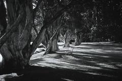 <<Dark Forest>> (www.jerrybei.com (5 million views)) Tags: sydney streetphotography australia infrared irfilm leicamp ilfordsfx200 alacarte rememberthatmomentlevel1 me2youphotographylevel2 me2youphotographylevel3 me2youphotographylevel1