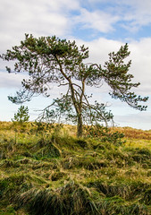 "Tentsmuir Beach • <a style=""font-size:0.8em;"" href=""http://www.flickr.com/photos/53908815@N02/8145178422/"" target=""_blank"">View on Flickr</a>"