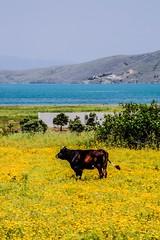 100514_Pasaliman_29_1 (emreyazici) Tags: manzara hayvan paaliman