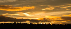 Golden Sunset (Superali007) Tags: sunset sky yellow clouds canon scotland highlands scenic scottish moray sunsetting findhorn canon7d efs1585mmf3556isusm efs1585mm