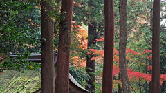 Sakamoto (lstr  clonn) Tags: autumn roof japan forest moss maple kyoto shrine momiji   japon giappone jinja taisha hiyoshi sakamoto hiei japn  hiyoshitaisha  kyoto2012