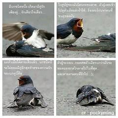 รู้ไหม นกชนิดไหน  เศร้าจัง