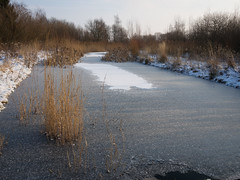 Not yet suitable for ice-skating (Teelicht) Tags: winter ice germany deutschland eis graben niedersachsen lowersaxony moorhttengraben schuntertal olympusem5 olympusm1250mmf3563 schunterniederung