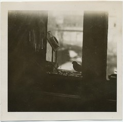 The Little Visitor (liquidnight) Tags: old blackandwhite bw cute bird window monochrome silhouette vintage square found photo birdseed bokeh eating antique wildlife snapshot seeds collection photograph vernacular dreamy hungry kindness damaged scratched visitor windowsill foundphotos