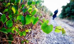 Leaving (BrianMills) Tags: hdr aurora leaf leaves color ambience blur tones shapes fujifilm