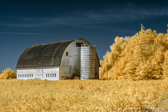 Color Infrared Barn (Chris Parmeter Photography (smokinman88)) Tags: infrared filter 590nm barn abstract color yellow skagit valley nikon d5200 landscape